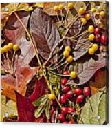Autumn Berries And Leaves Background  Acrylic Print