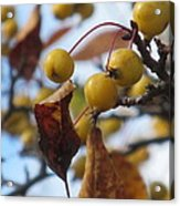 Autumn Berry Branch Acrylic Print