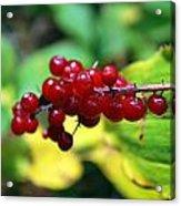 Autumn Berry Acrylic Print
