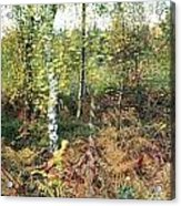 Autumn Birchh Forest Acrylic Print