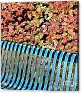 Autumn Blue Bench Acrylic Print
