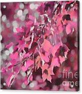Autumn Blush Acrylic Print