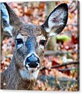 Autumn Buck Acrylic Print