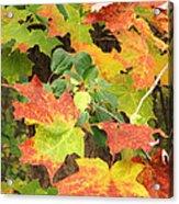 Autumn Collage Acrylic Print