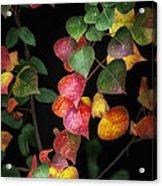 Autumn Color Acrylic Print by Brenda Bryant