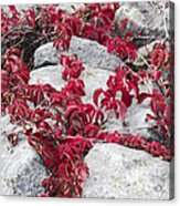 Autumn Color Is Red Acrylic Print