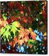 Autumn Color Medley Acrylic Print