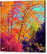 Autumn Colors 13 Acrylic Print
