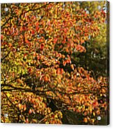 Autumn Colors In Pa Acrylic Print