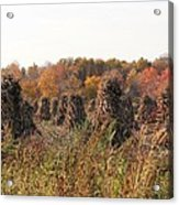 Autumn Corn Acrylic Print