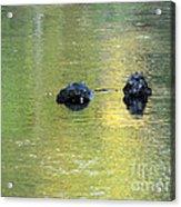 Autumn Creek Reflections Acrylic Print