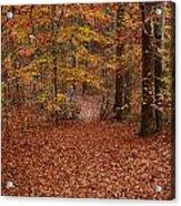 Autumn Creekside Trail Acrylic Print
