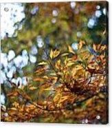 Autumn Crescendo Acrylic Print
