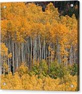 Autumn Curtain Acrylic Print