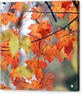 Autumn Day Dream Acrylic Print