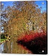 Autumn Dogwood Acrylic Print