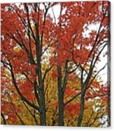 Autumn Duel Acrylic Print by Todd Sherlock