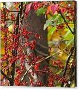 Autumn Excellence 6181 Acrylic Print