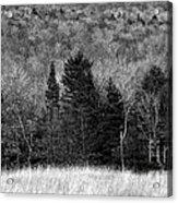 Autumn Field Bw Acrylic Print