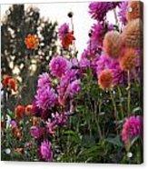 Autumn Flowers Acrylic Print by Sarai Rachel