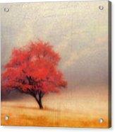 Autumn Fog Acrylic Print by Darren Fisher