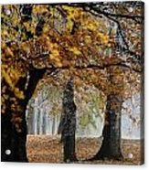 Autumn Foliage Acrylic Print