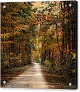 Autumn Forest 3 Acrylic Print