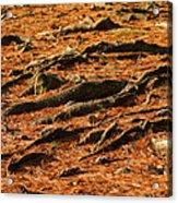 Autumn Forest Floor Acrylic Print