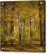 Autumn Forest Scene In West Michigan No.1140 Acrylic Print