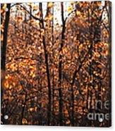Autumn Glory Acrylic Print by Chris Hill