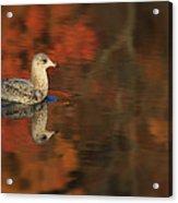 Autumn Gull Acrylic Print
