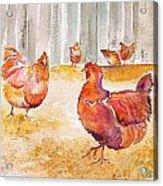 Autumn Hens Acrylic Print