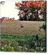 Autumn Hunt Acrylic Print