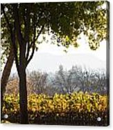 Autumn In A Vineyard Acrylic Print