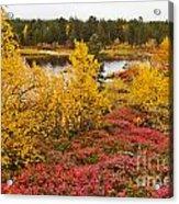 Autumn In Inari Acrylic Print