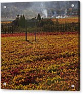 Autumn In Napa Valley Acrylic Print