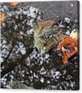 Autumn In New York City Acrylic Print by Chris Ann Wiggins