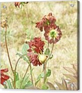 Autumn In The Garden  Acrylic Print by Pamela Patch