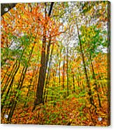 Autumn In The Hocking Hills Acrylic Print