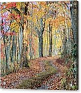 Autumn Lane Acrylic Print by Heavens View Photography