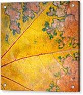 Autumn Leaf Abstract Acrylic Print