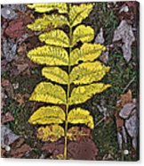 Autumn Leaf Art I Acrylic Print