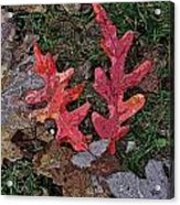 Autumn Leaf Art IIi Acrylic Print
