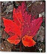 Autumn Leaf Art Iv Acrylic Print