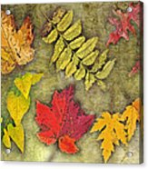 Autumn Leaf Collage Acrylic Print