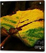 Autumn Leaf Acrylic Print by Daniele Smith