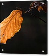 Autumn Leaf Acrylic Print by Frits Selier