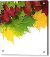 Autumn Leaves In Colour Acrylic Print