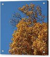 Autumn Leaves In Tn Acrylic Print