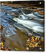 Autumn Leaves In Water II Acrylic Print